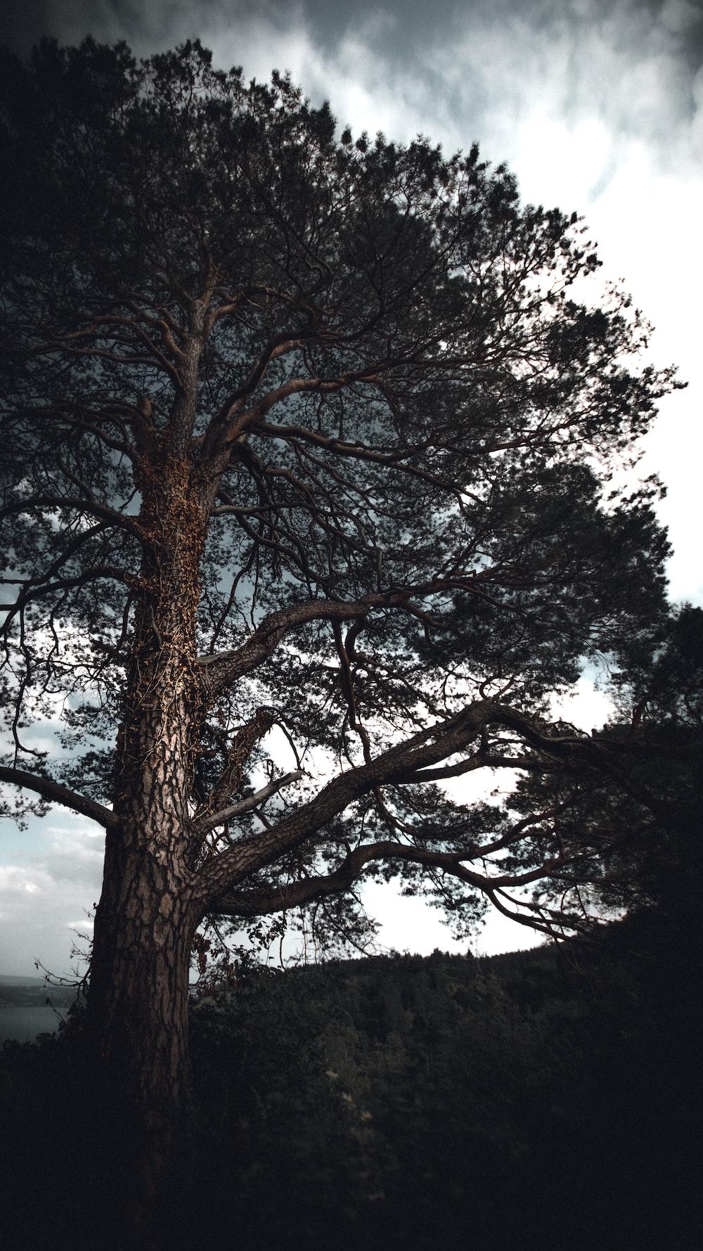 brown tree under white sky during daytime