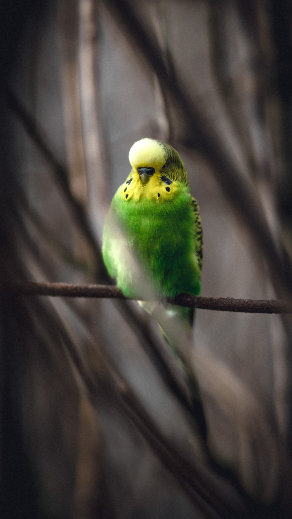 green and white bird on brown tree branch