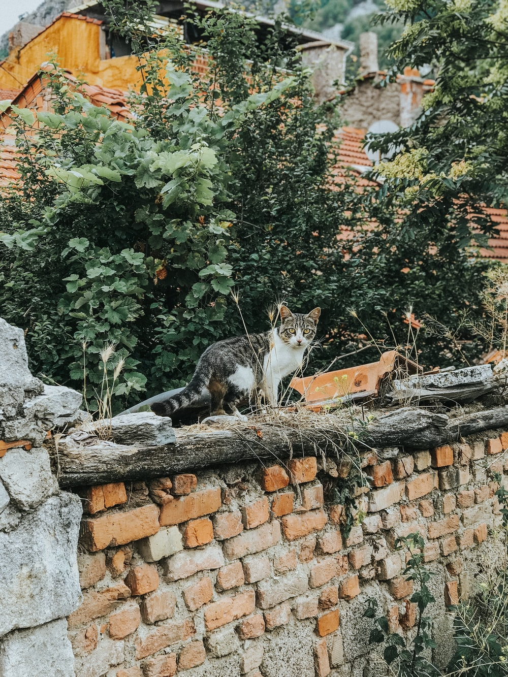 calico cat on brown brick wall