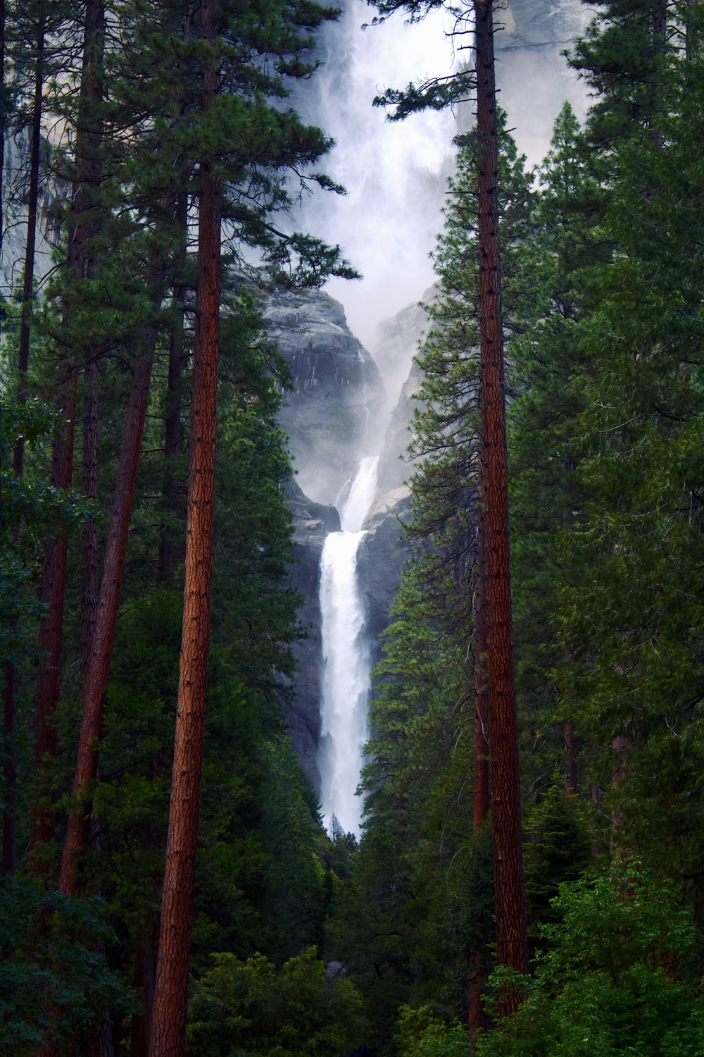green and brown trees with water falls