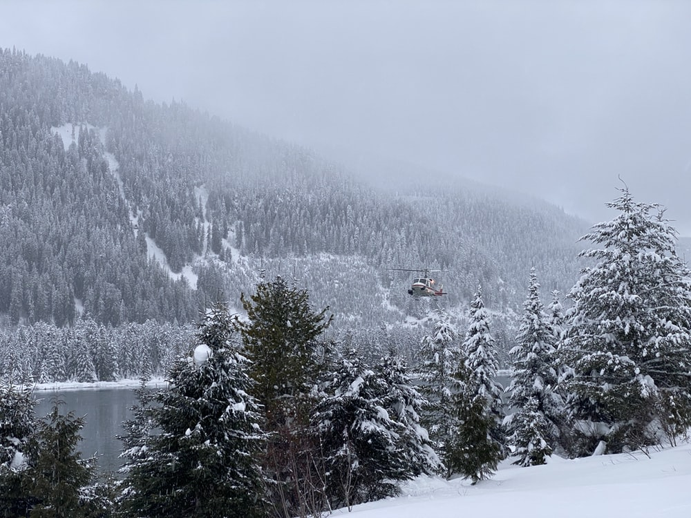 pine trees covered with snow near body of water during daytime