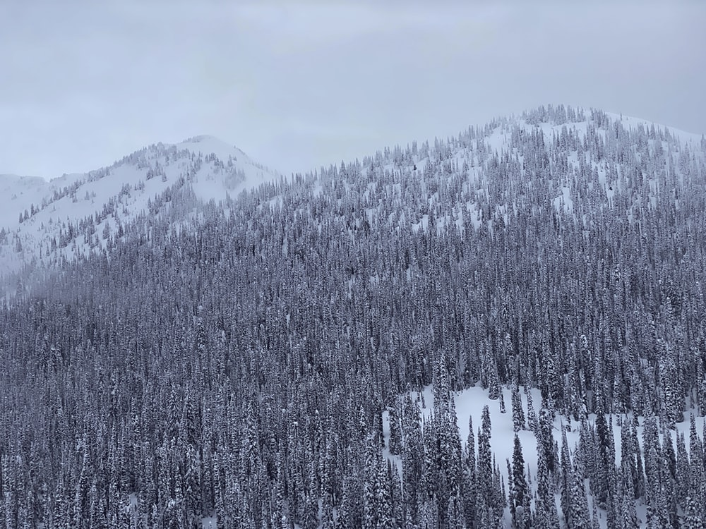 grayscale photo of trees and mountain