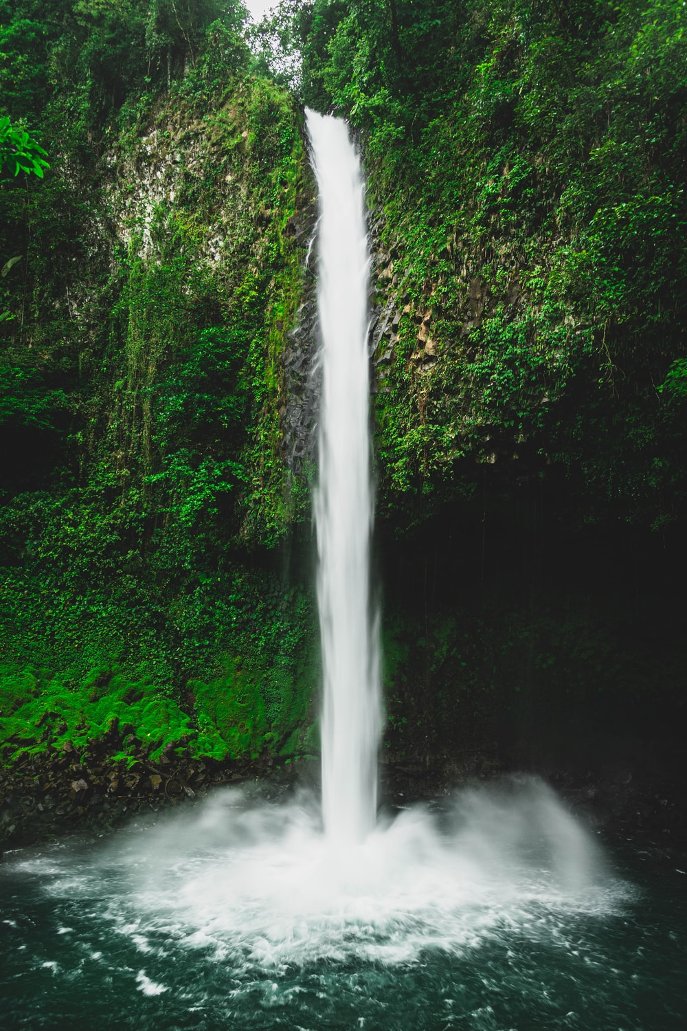 water falls in the middle of green trees