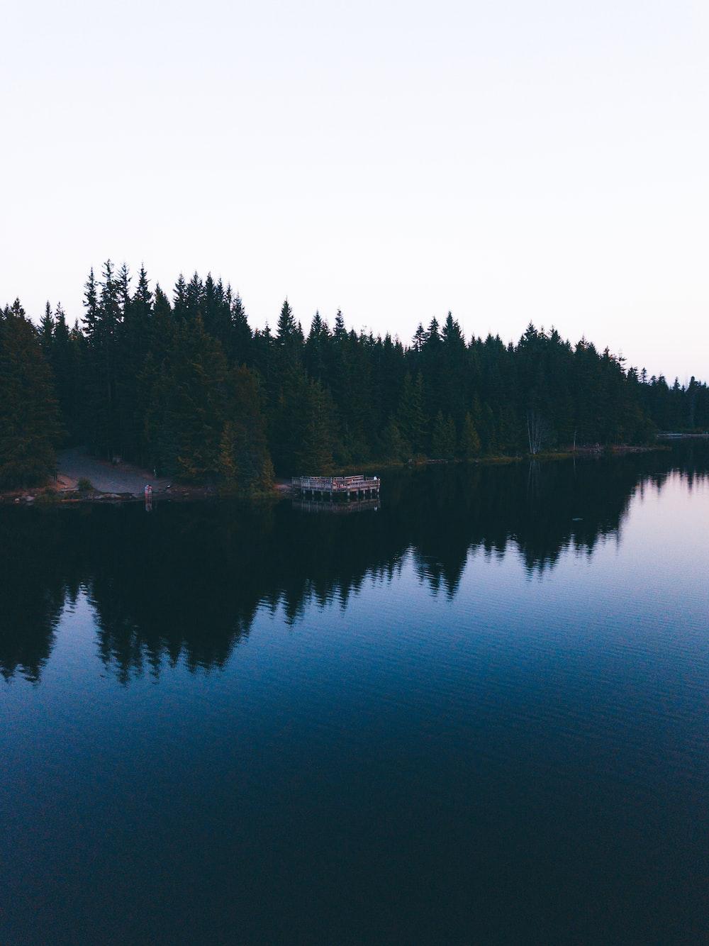 green trees beside lake under gray sky
