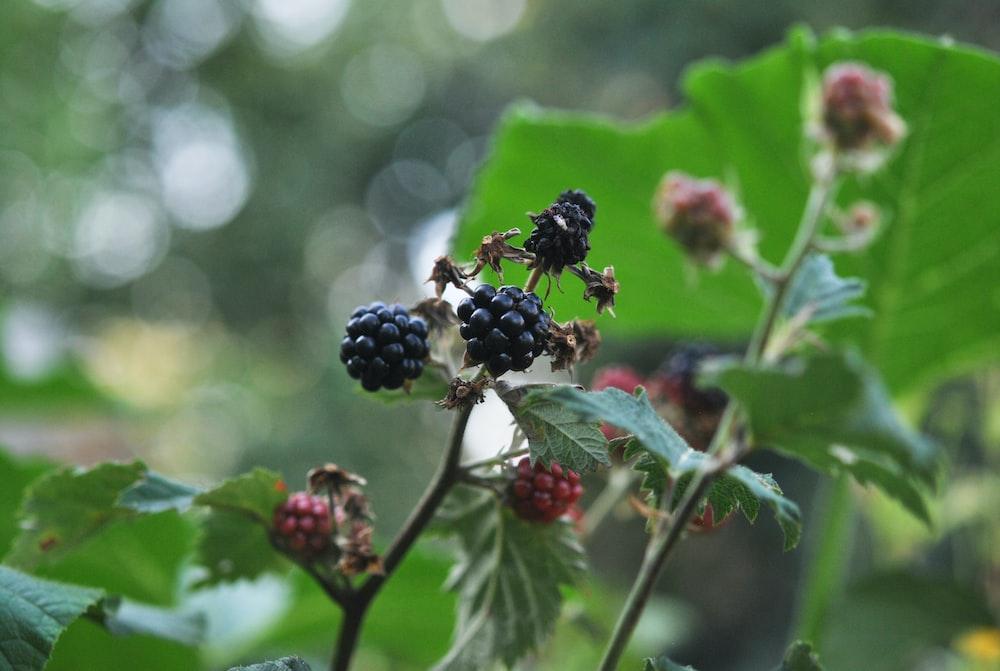 black round fruits in tilt shift lens