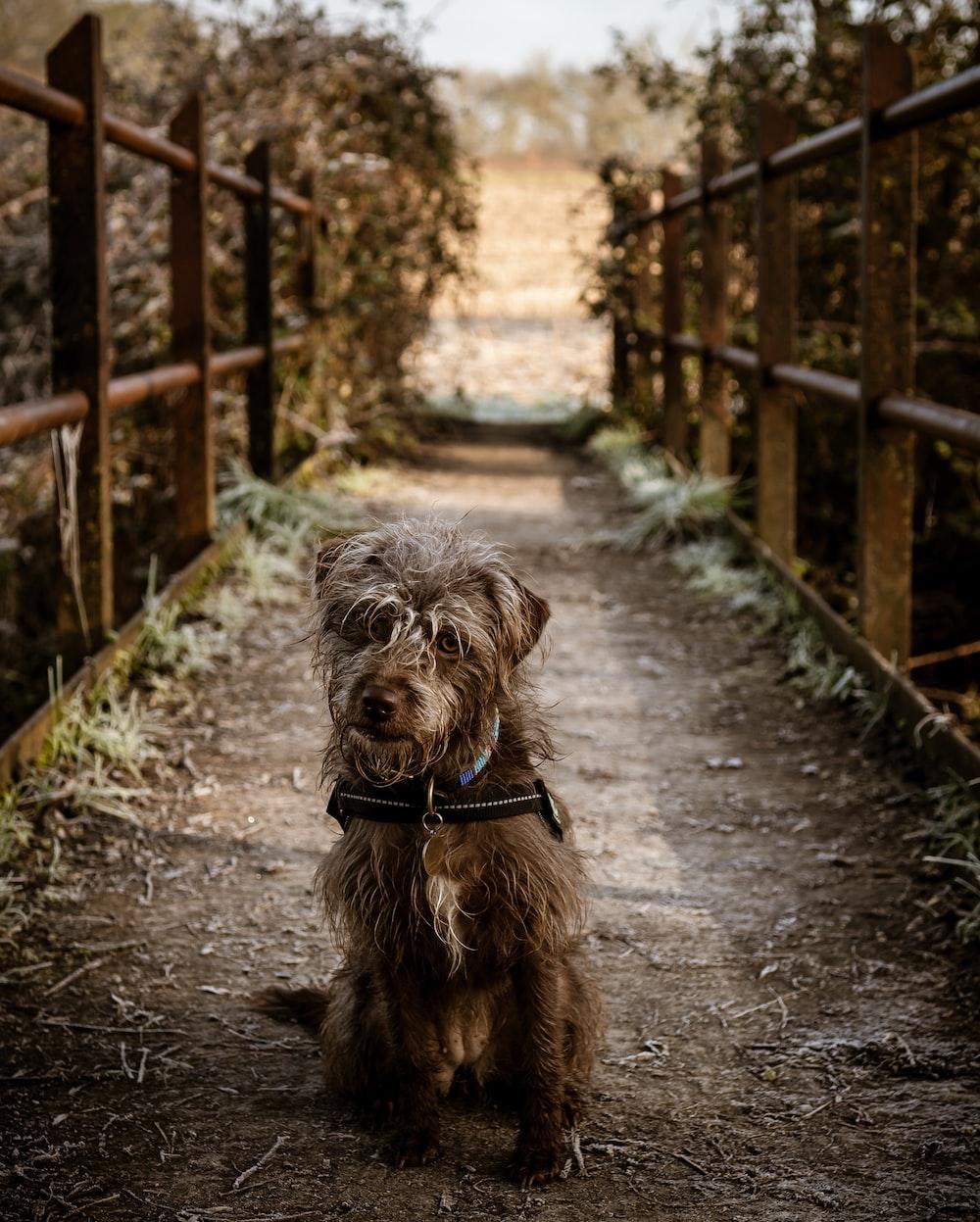 brown long coat small dog walking on pathway during daytime