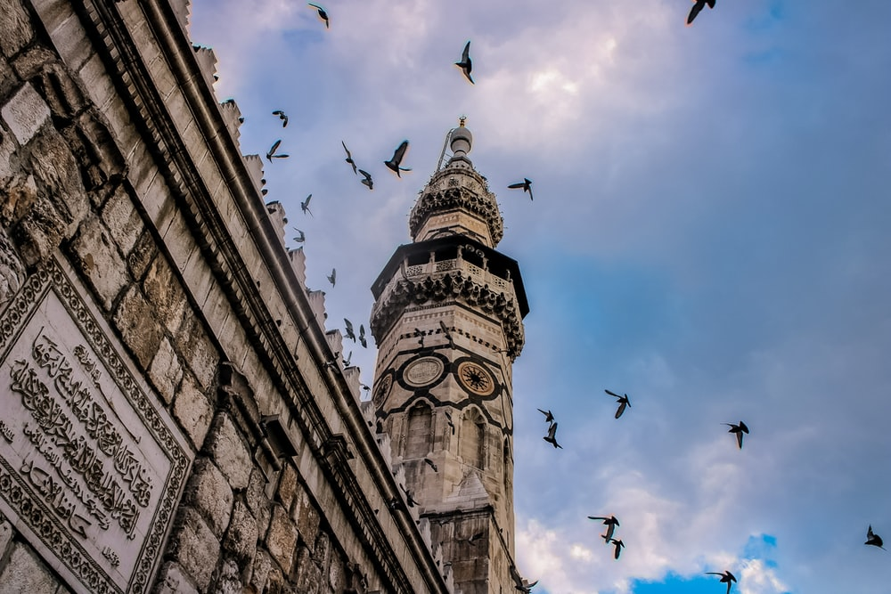 low angle photography of flock of birds flying over the building during daytime