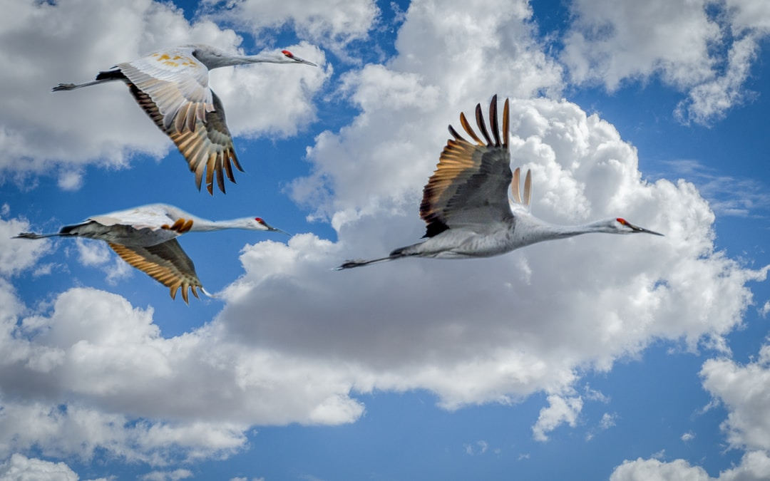Why Companies Are Migrating Legacy Systems to Cloud Infrastructure
