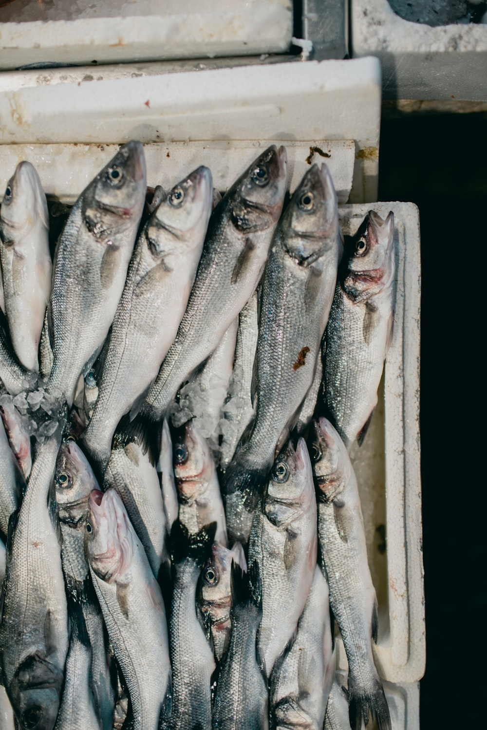 white and black fish on brown wooden crate