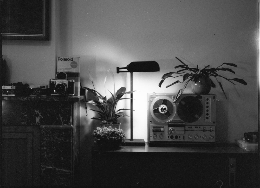 grayscale photo of a potted plant on a table