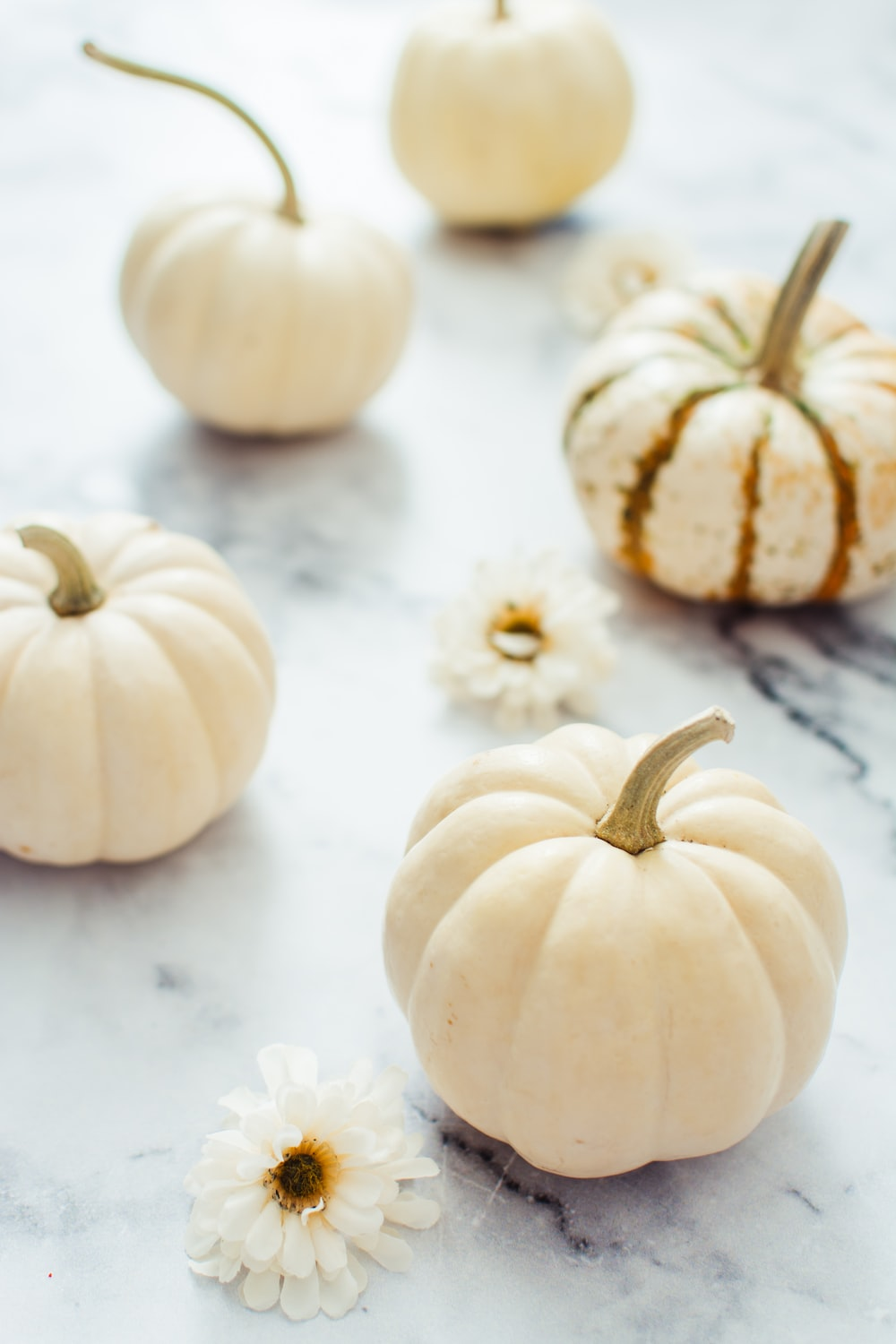 white and brown pumpkins on white table