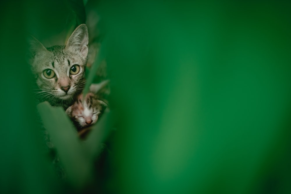 brown tabby cat in green background