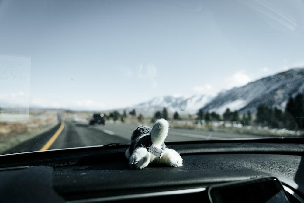 white plush toy on car dashboard