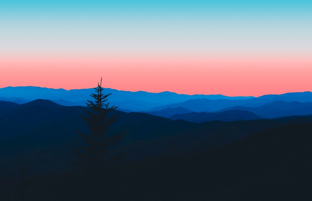 silhouette of tree on top of mountain during sunset