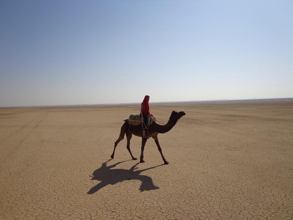 the iconic Thar desert: 4 days around Jodhpur