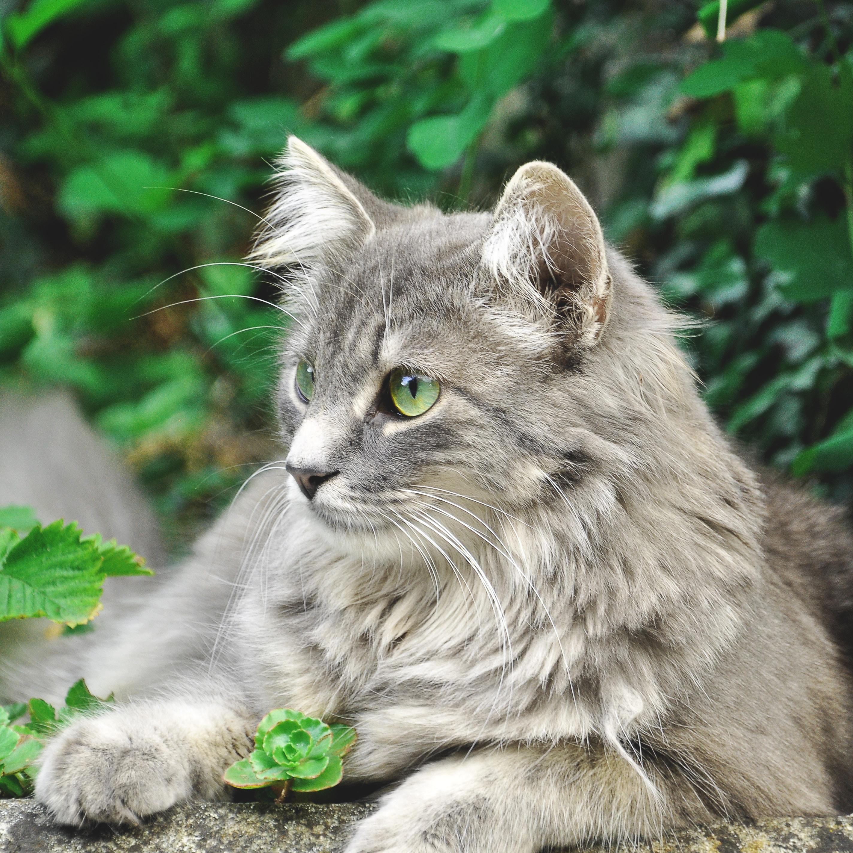 Cats of Bern