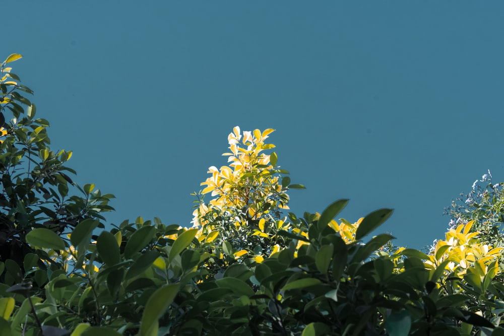 yellow flower with green leaves under blue sky during daytime