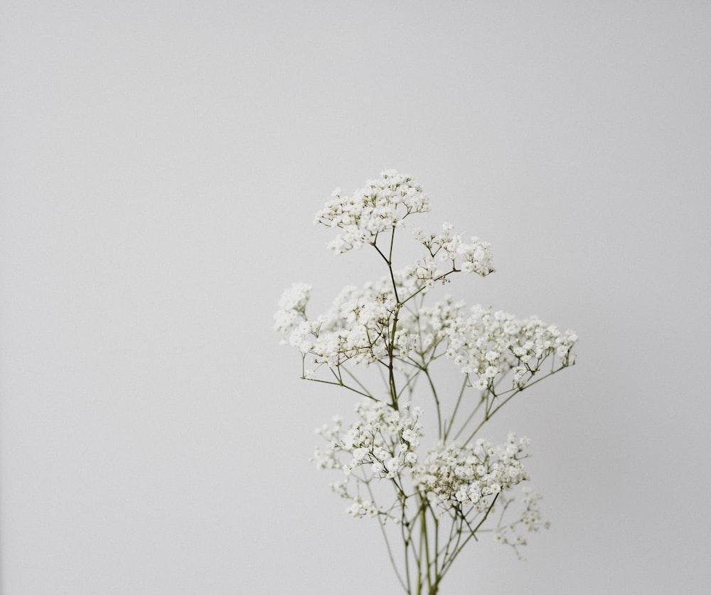 white flower on white background