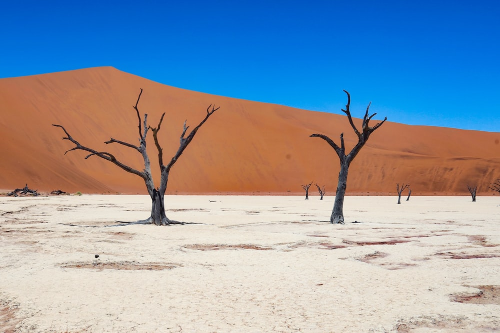 bare tree on desert during daytime