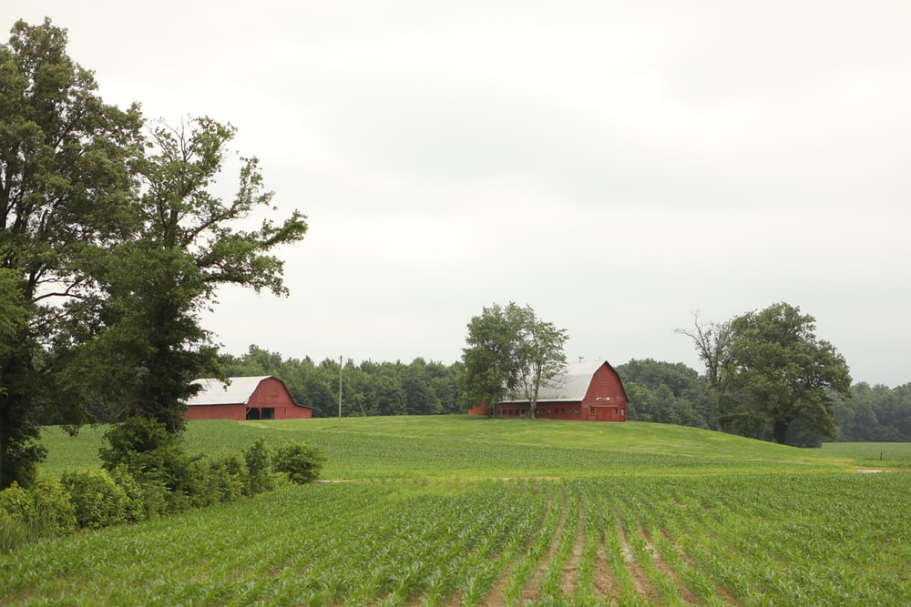 red barn in the middle of green grass field