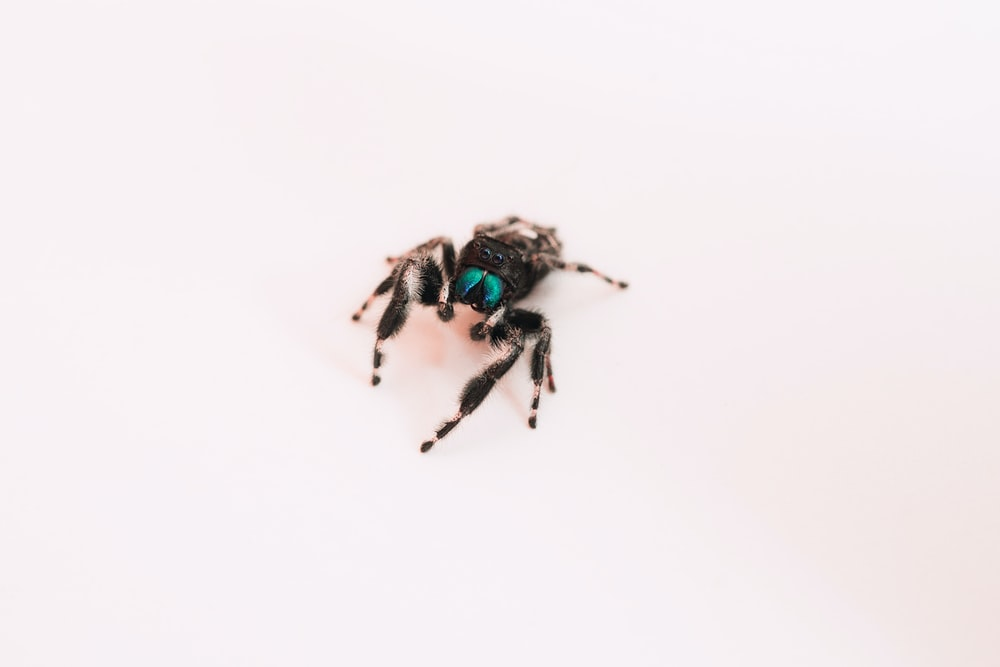 black and green spider on white surface