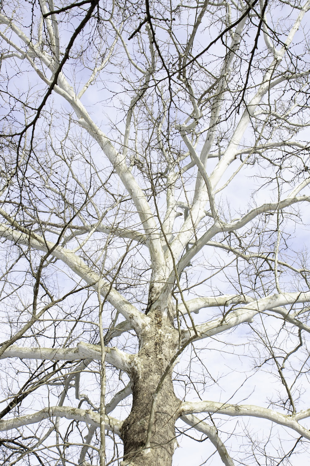 brown leafless tree under blue sky during daytime