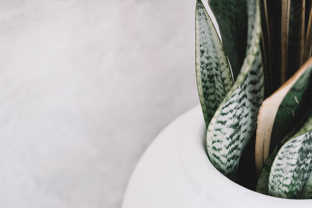 green snake on white ceramic container