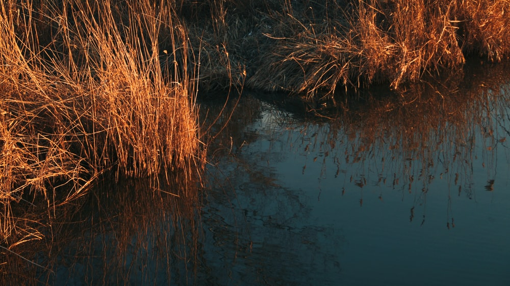 brown grass on water during daytime