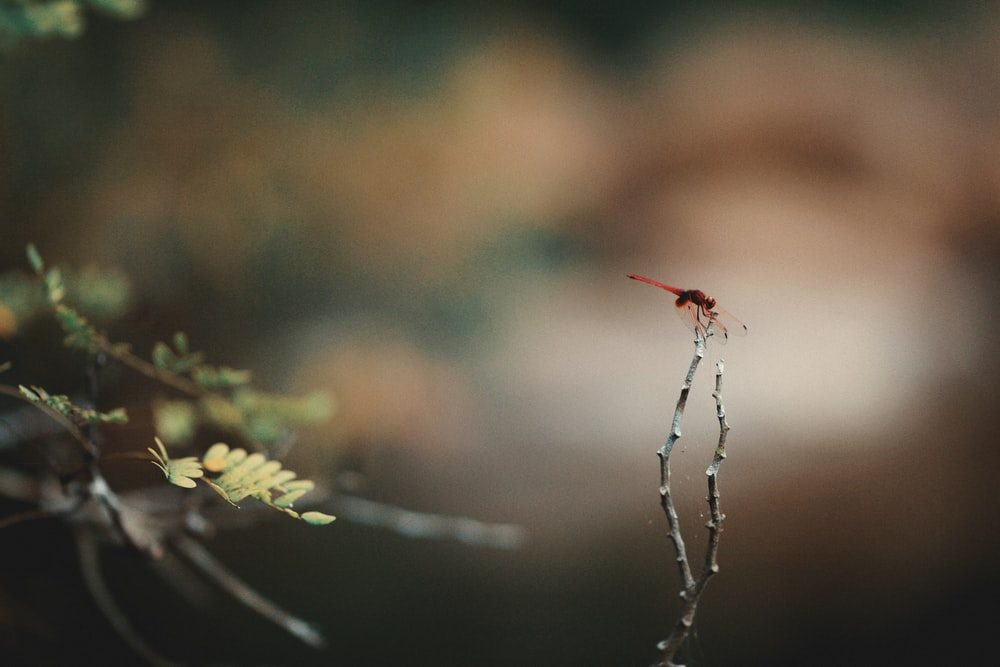 red and black spider on green plant stem in tilt shift lens