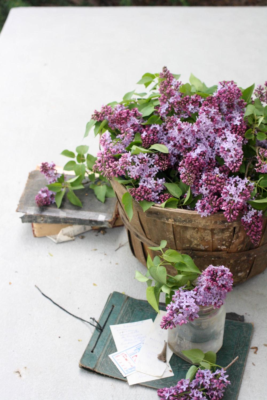 pink flowers in brown wooden pot