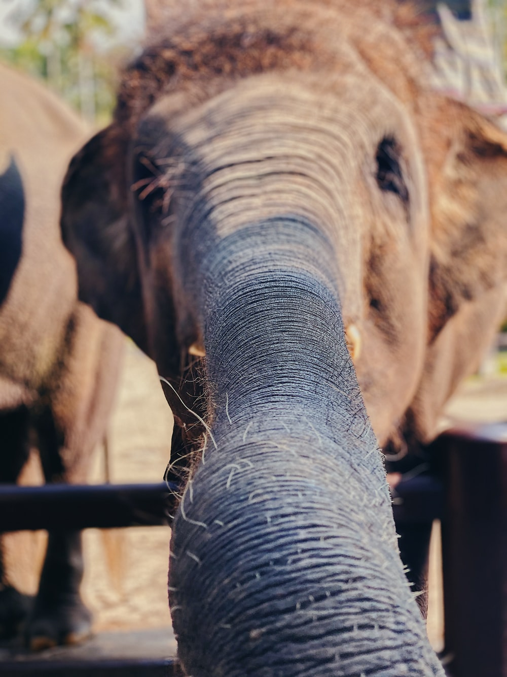 brown elephant in close up photography during daytime