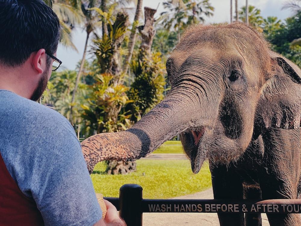 man in blue shirt riding elephant