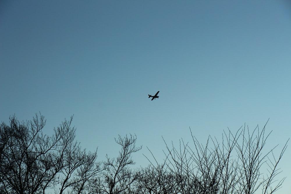 black bird flying over bare tree during daytime