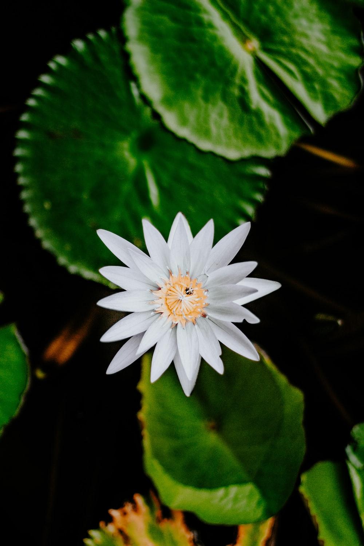 white flower on green leaves