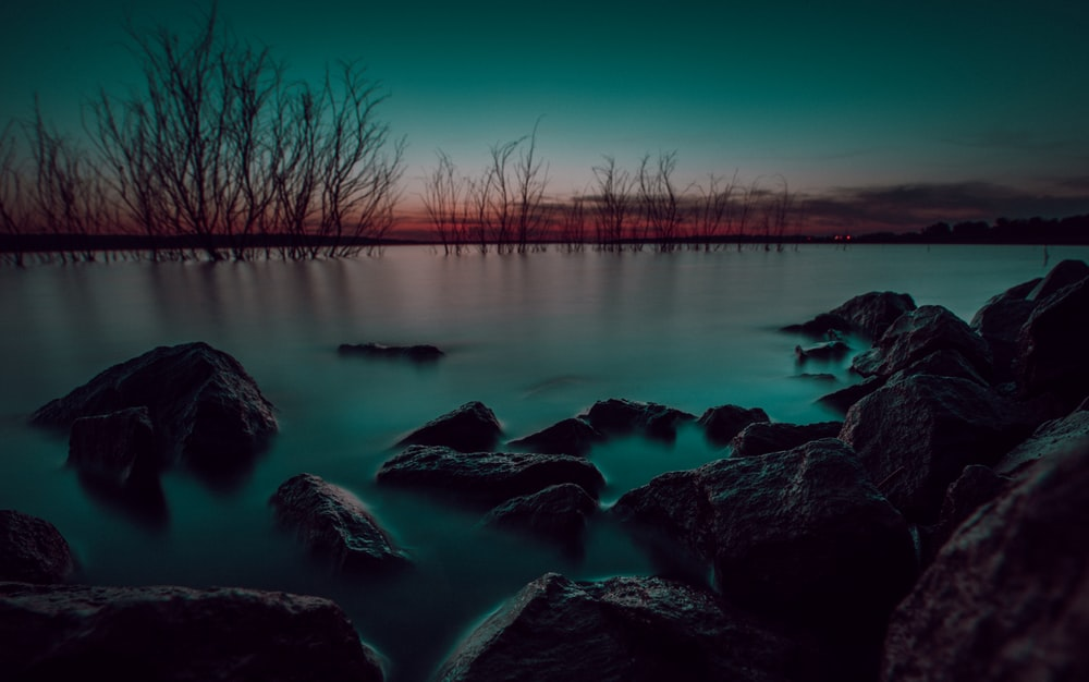 body of water near bare trees during night time