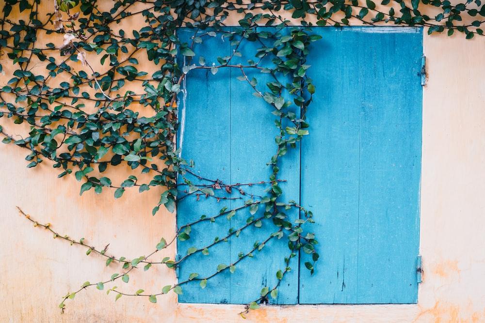 blue wooden door with brown leaves