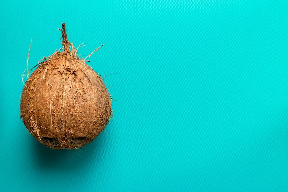 brown coconut fruit on blue background