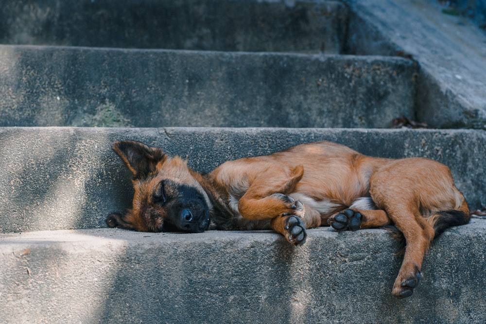 brown and black short coated medium sized dog lying on gray concrete floor during daytime