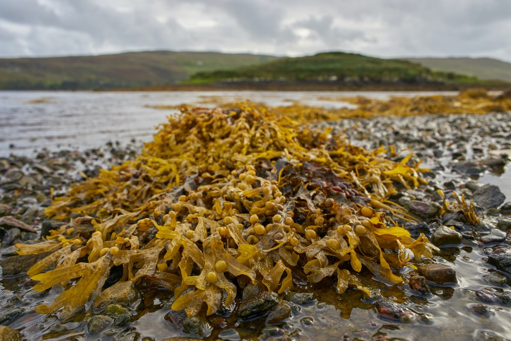 yellow and brown dried leaves on shore during daytime