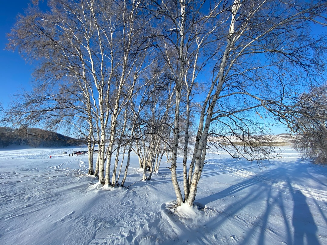 tree in snow land
