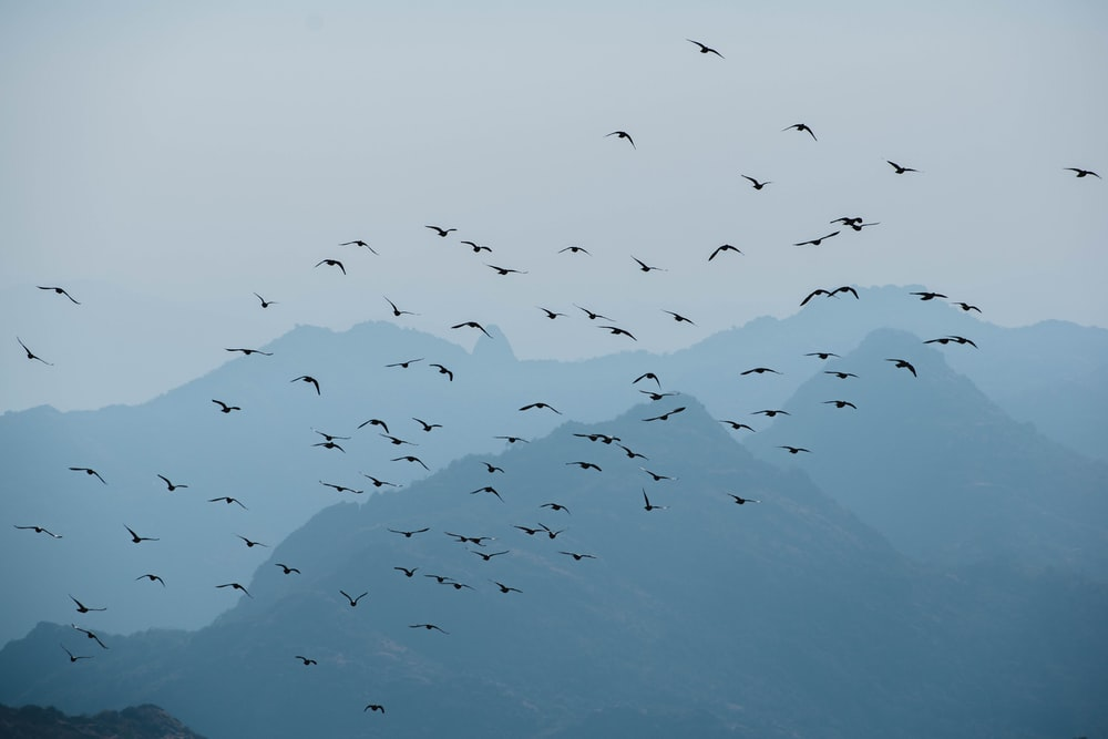 flock of birds flying over the mountain during daytime