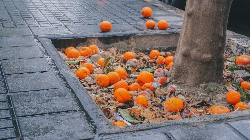 orange fruits on gray concrete floor