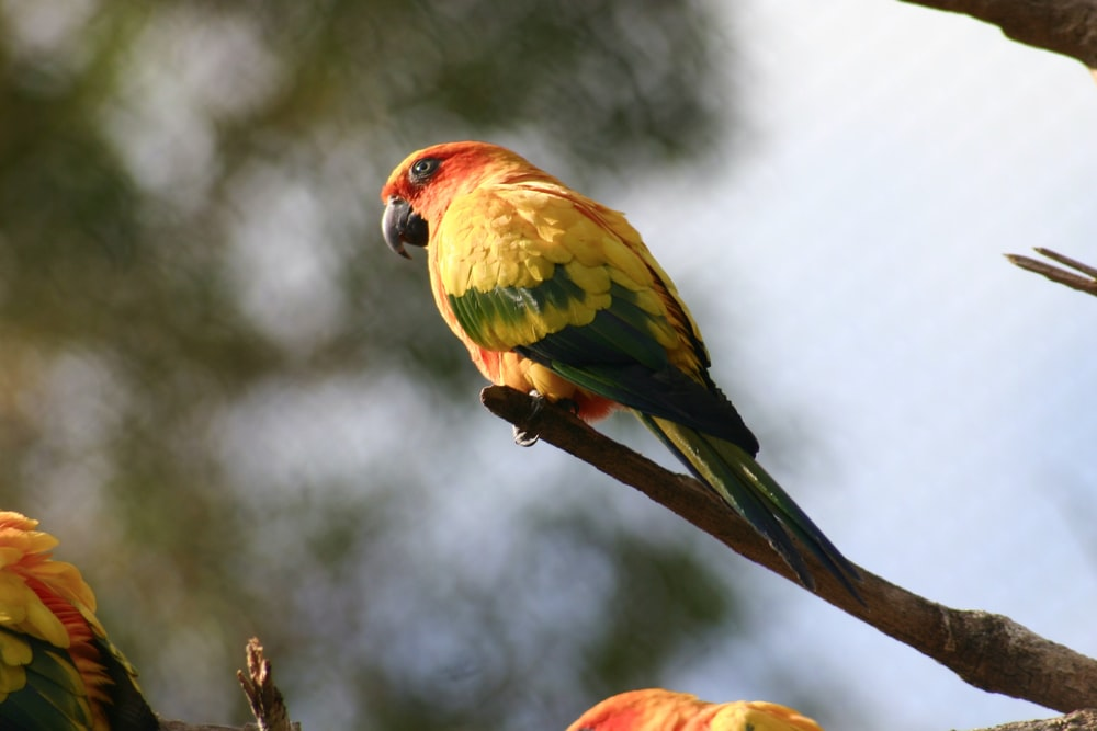 red green and yellow bird on brown tree branch