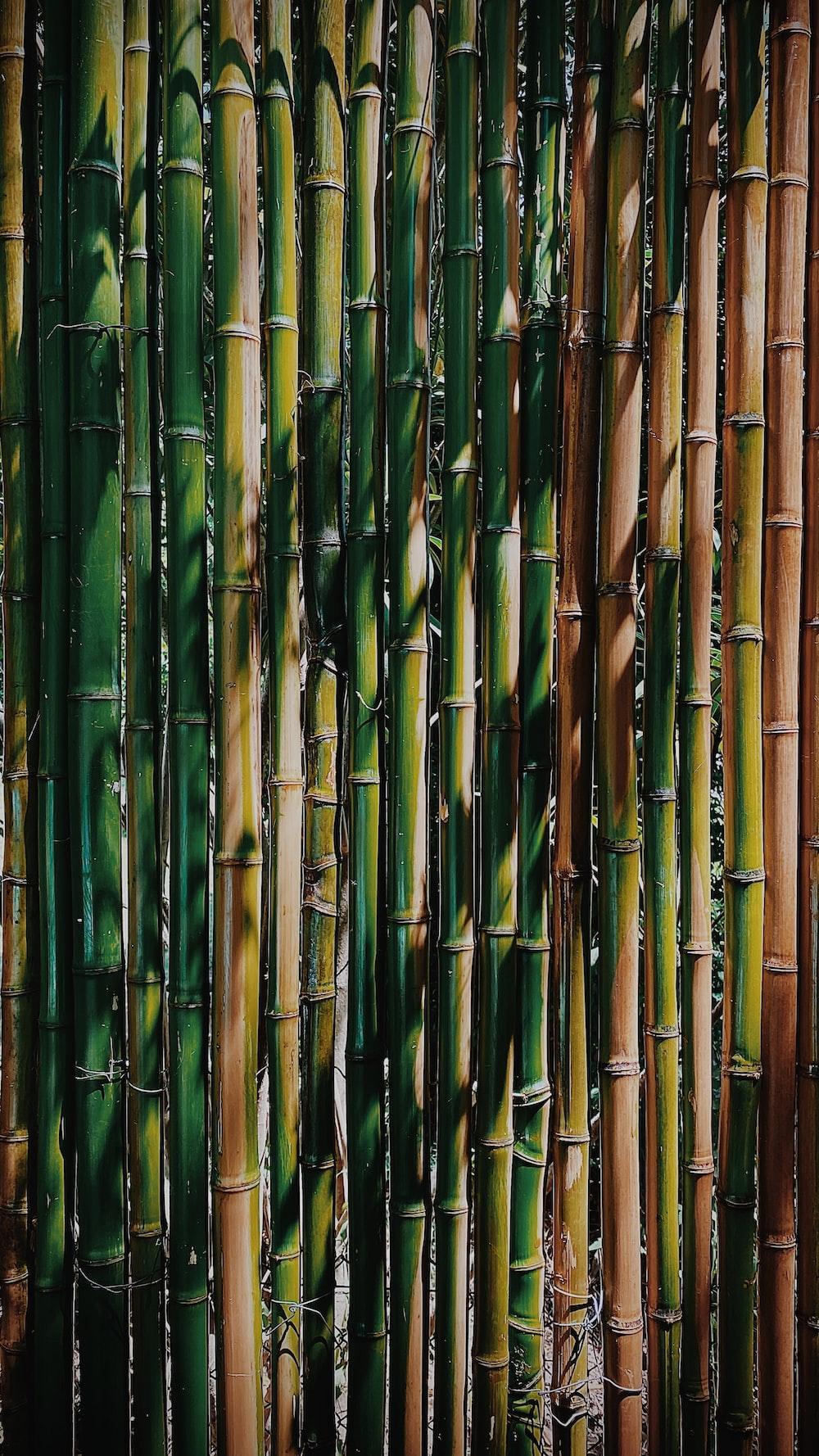 green bamboo sticks during daytime