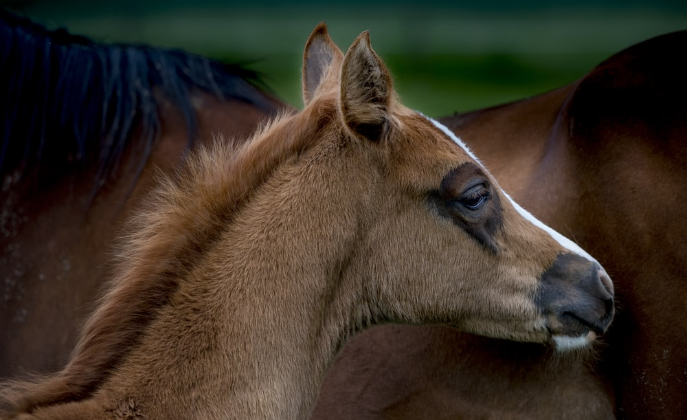 brown horse in close up photography during daytime