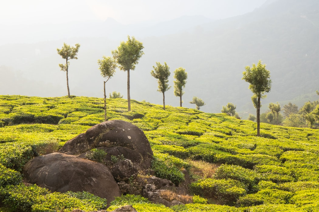 Greeneries on your way during 3-day honeymoon to Kerala