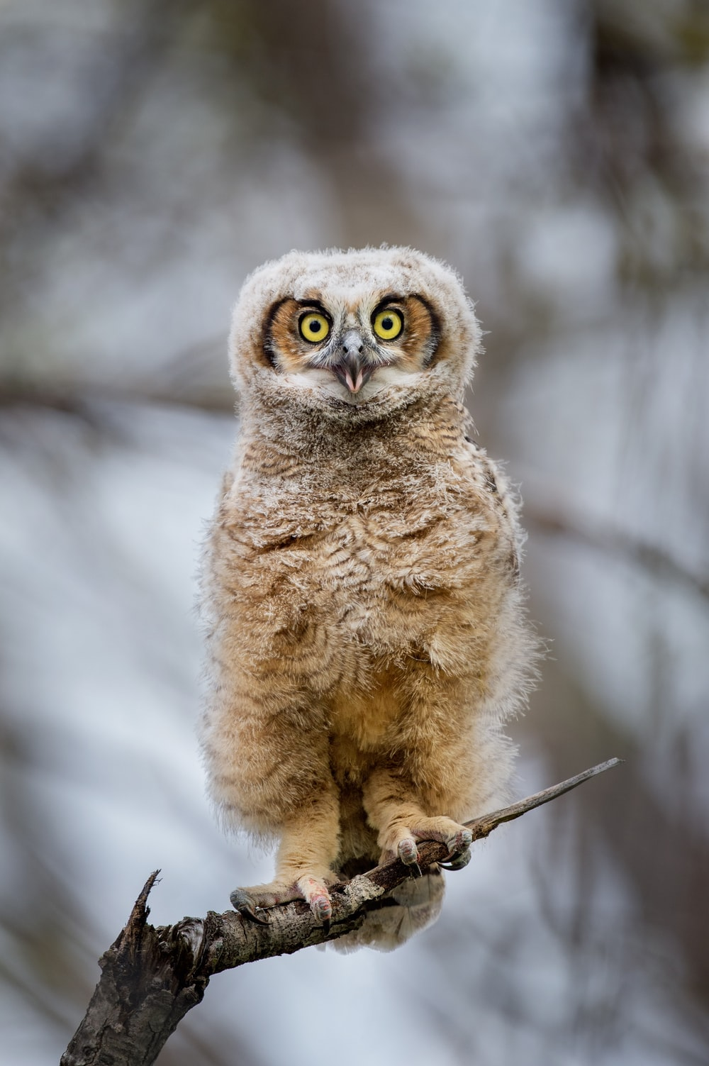 brown owl on snow covered ground during daytime