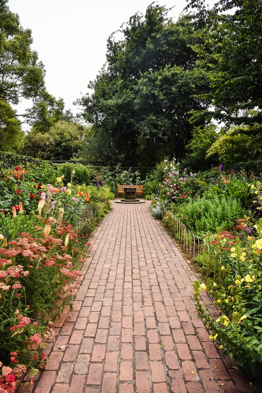 brown brick pathway between green plants during daytime