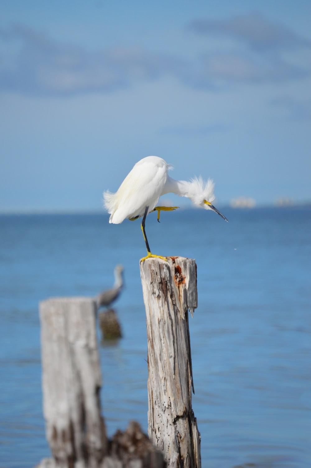 white bird on brown wooden post near sea during daytime