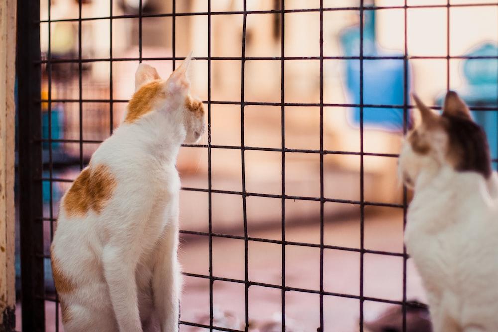 white and orange cat on cage